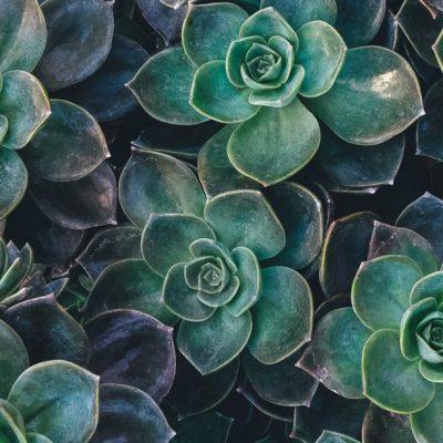 succulents-2-1024x614